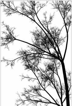 درختی در زمستان