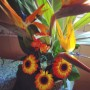 گل های خواستگاری